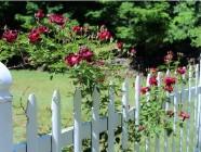 AAA Fence Master Fence White Fence